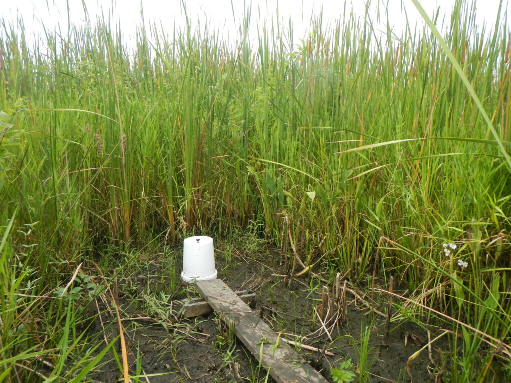 Greenhouse gas measurements taken at a freshwater emergent wetland with the vegetation removed