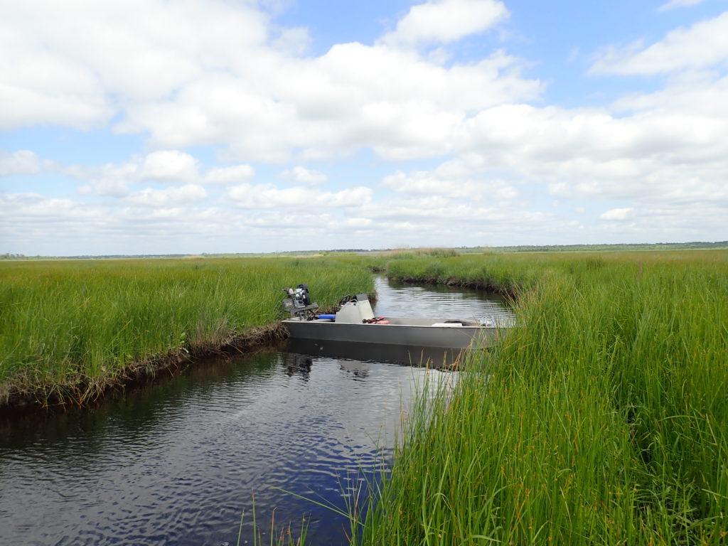 Theout siteat theHammondassimilation wetlands