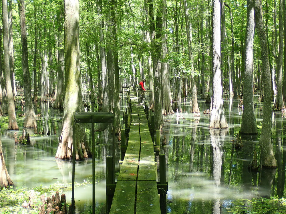 The treatment boardwalk at the Luling assimilation wetlands