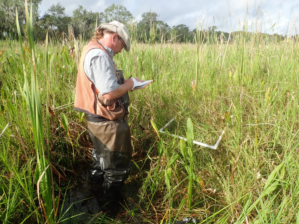 Jason Day collecting species composition and EOSL biomass samples at the St. Charles assimilation wetlands Out site (October 2018).